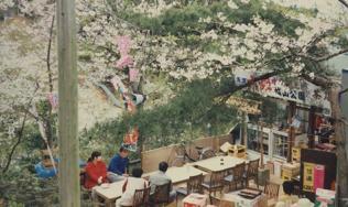 sakura-mise